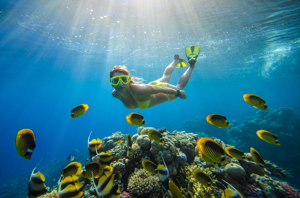 Caribbean Diving