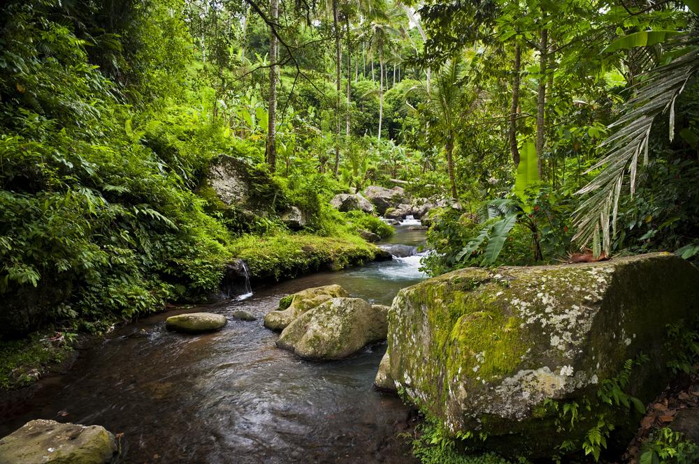 Indonesia Woodland