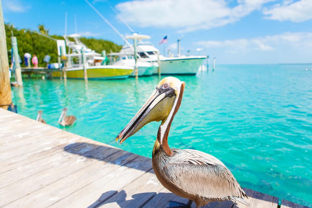 Islamorada and the key yacht charter
