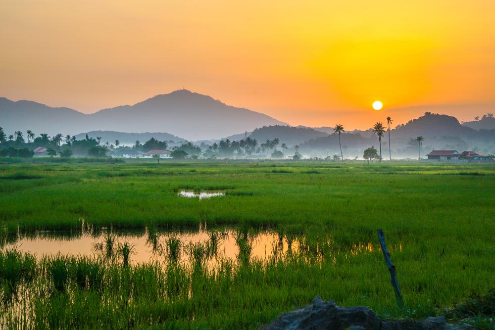 Langkawi Rice Fields
