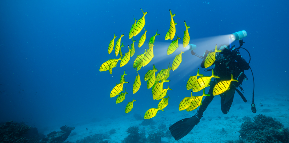 Seychelles Diving - Boatbookings Luxury Yacht Charter