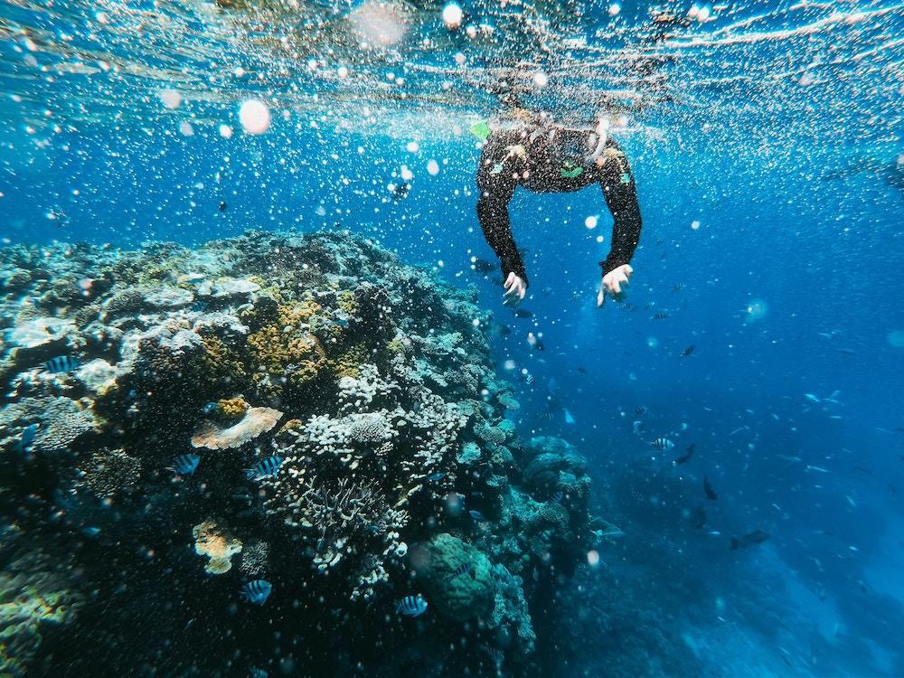 snorkelling, bvi yacht charter, bvi post irma