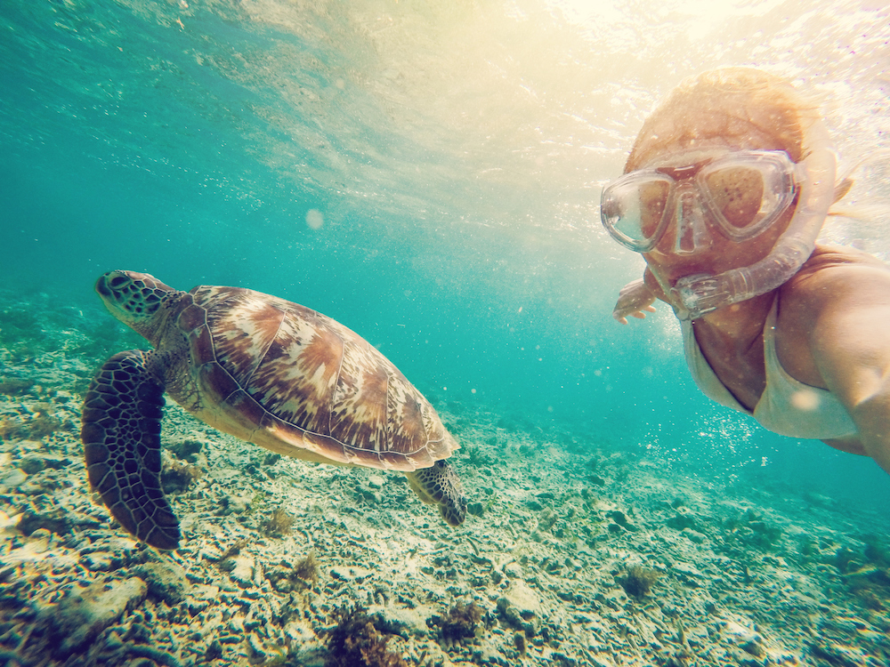 swimming with turtles on your bahamas yacht charter (abacos)