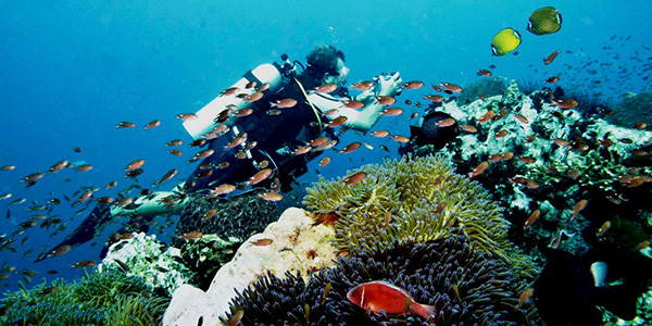 Similan_Dive_Center_-_Similan_islands