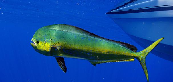 slide-dolphin