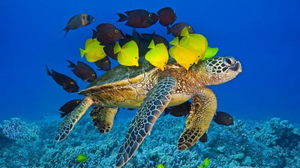turtlefish1