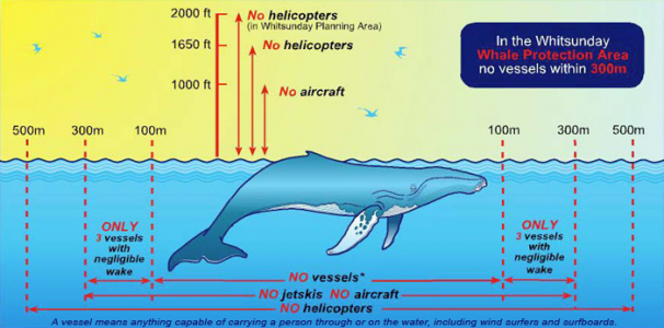 Rules for whale watching in the Whitsundays